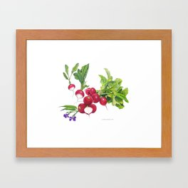 Radishes and their blossoms Framed Art Print