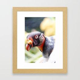 King Vulture Framed Art Print