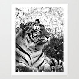 Bengal Tiger in Repose Art Print