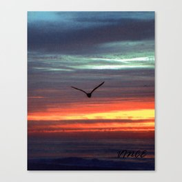 Black Gull by nite Canvas Print