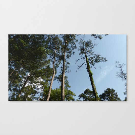 Skyward Bound Canvas Print