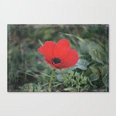 Wild Anemone Canvas Print