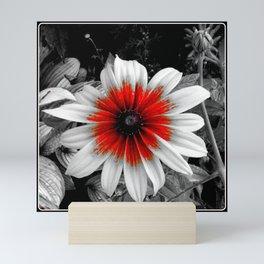 Flower | Flowers | Red Stroke Gaillardia | Red and White Flower | Nadia Bonello Mini Art Print