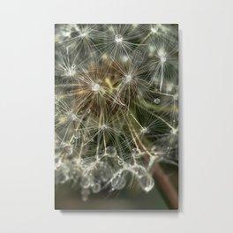 Extreme Macro image of a Dandelion Seed head Metal Print