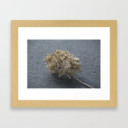Blossoms on Blacktop Framed Art Print