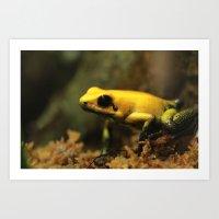 Golden Poison Frog Art Print