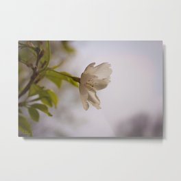 Cherry Blossom Hill Metal Print