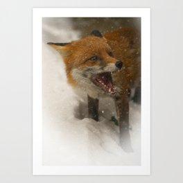 Wild Red Fox In The Snow Art Print