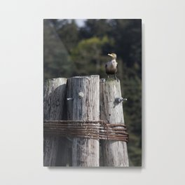 Cormorant's Perch Metal Print