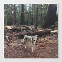 california Canvas Prints featuring Injured Coyote by Kevin Russ