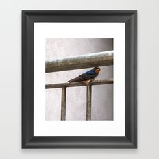 One Swallow Doesn't Make a Summer Framed Art Print