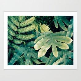 Emerald Green Fern Leaves - Plant Photography Art Print