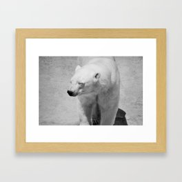 Polar Bear Photography | Canada | Black and white | Mammal | Nature | Wildlife Framed Art Print