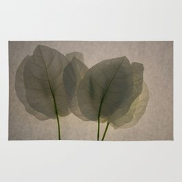 white transparent leaves photography Rug