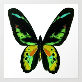 Butterfly in Black and Green Art Print
