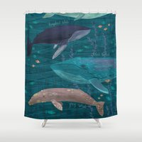 whales Shower Curtains featuring Whales by Stephanie Fizer Coleman