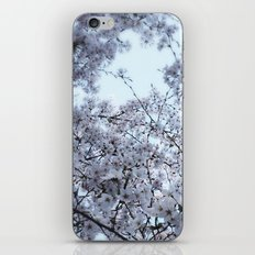 Cherry Blossoms in Spring iPhone & iPod Skin