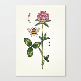 aromatic red clover Canvas Print