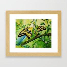Lime Tree Butterfly II Framed Art Print