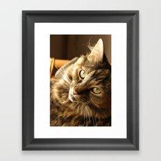 Thoughtful cat Framed Art Print