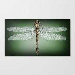 Dragonfly Gratitude Canvas Print
