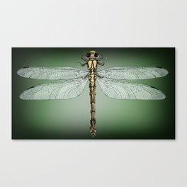 Dragonfly Gratitude Canvas Print