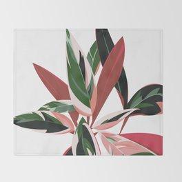 Calathea Stromanthe Triostar - House plants Throw Blanket