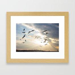 Seagulls pack Framed Art Print