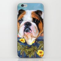 english bulldog iPhone & iPod Skins featuring Chic English Bulldog by Jai Johnson