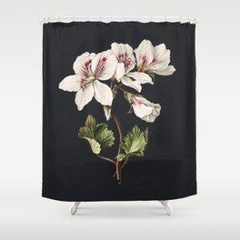Pelargonium album bicolor by M de Gijselaar(1830) Shower Curtain