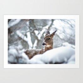 Grace in Nature Art Print