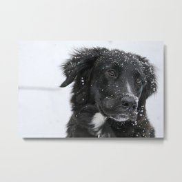 Snow Day 14 Metal Print