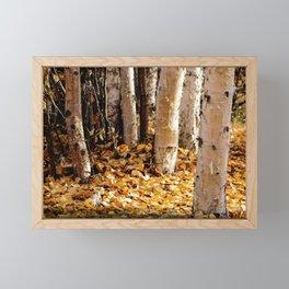 Forest Light Birch Trees in Fall, Creamers Field, Fairbanks Alaska Framed Mini Art Print