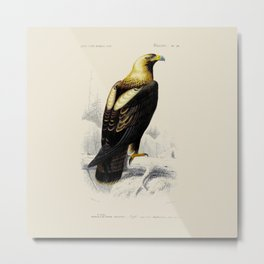 Vintage Golden Eagle Metal Print