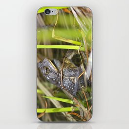 Toad in the pond iPhone Skin