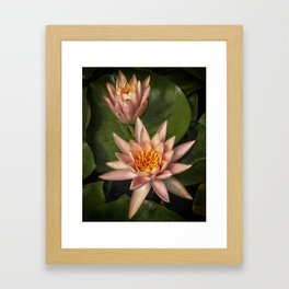 Coral Pink Water Lilies Framed Art Print