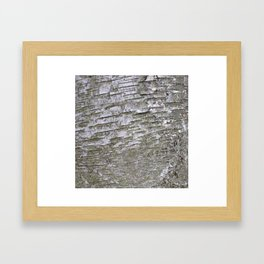 Abstracts in Nature Series -- Silver Birch Bark Framed Art Print