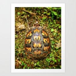 Eastern Box Turtle Shell Pattern  Art Print