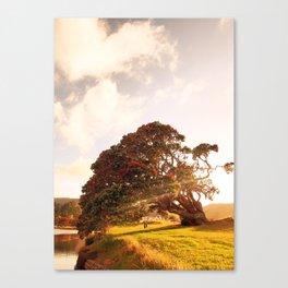 Pohutukawa swing tree Canvas Print