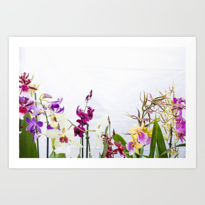 Different Orchid Plants On White Background Art Print By