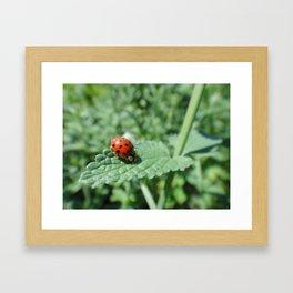Ladybug on a Leaf Framed Art Print