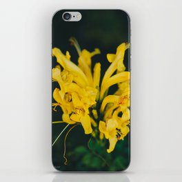 Beautiful yellow flower on black background - Botanical Photography #Society6 iPhone Skin