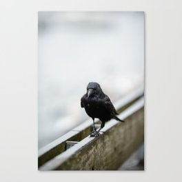 Black crow walking on a wooden fence on a rainy day. Canvas Print