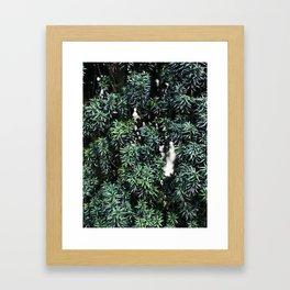 Evergreen tree Framed Art Print