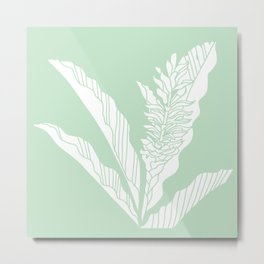 tropical ginger mint background Metal Print
