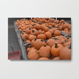 Pumpkin Picking 2 Metal Print