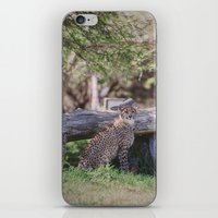 cheetah iPhone & iPod Skins featuring Cheetah by Retro Love Photography