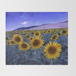 Sunflowers At Blue Hour . Square Throw Blanket