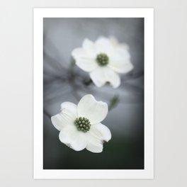 Dogwood Blossoms Art Print