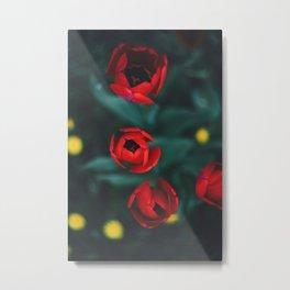 Red roses yellow Metal Print
